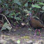 Brown Wood Rail