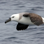Pelagic Birds